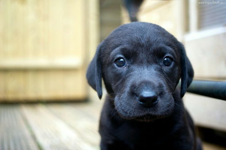 Ooooooooo.....how very very sweeet <3
