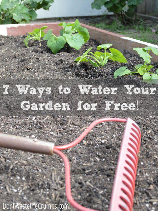 7 Ways to Water the Garden for Free | http://dontwastethecrumbs.com/2014/05/an-urban-garden-update-plus-7-ways-to-water-the-garden-for-free/