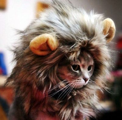 Lion mane cat costume plus more of purr-fect Halloween costumes for cats #halloween #spon #cats