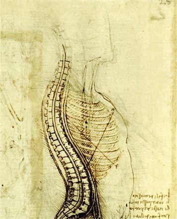 Synovial Fluid | Spinal Flexion | Drift Velocity