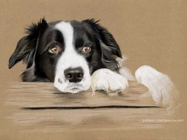Bonded Pair Dogs Finally Gets Adopted By The Perfect Family Dog Paintings Dog Drawing Collie Dog
