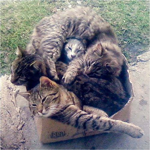 Typical cat...If theres a box, a Cat needs to get into it, doesn't matter who was there first....its a cat thing!