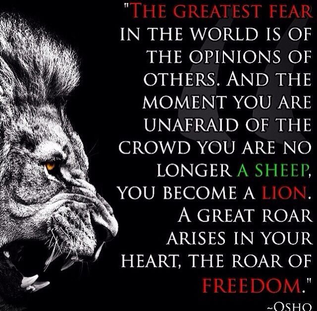 Lion Sheep Quote: Lions Don't Lose Sleep Over Opinions Of Sheep