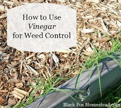 use vinegar for natural weed control, gardening