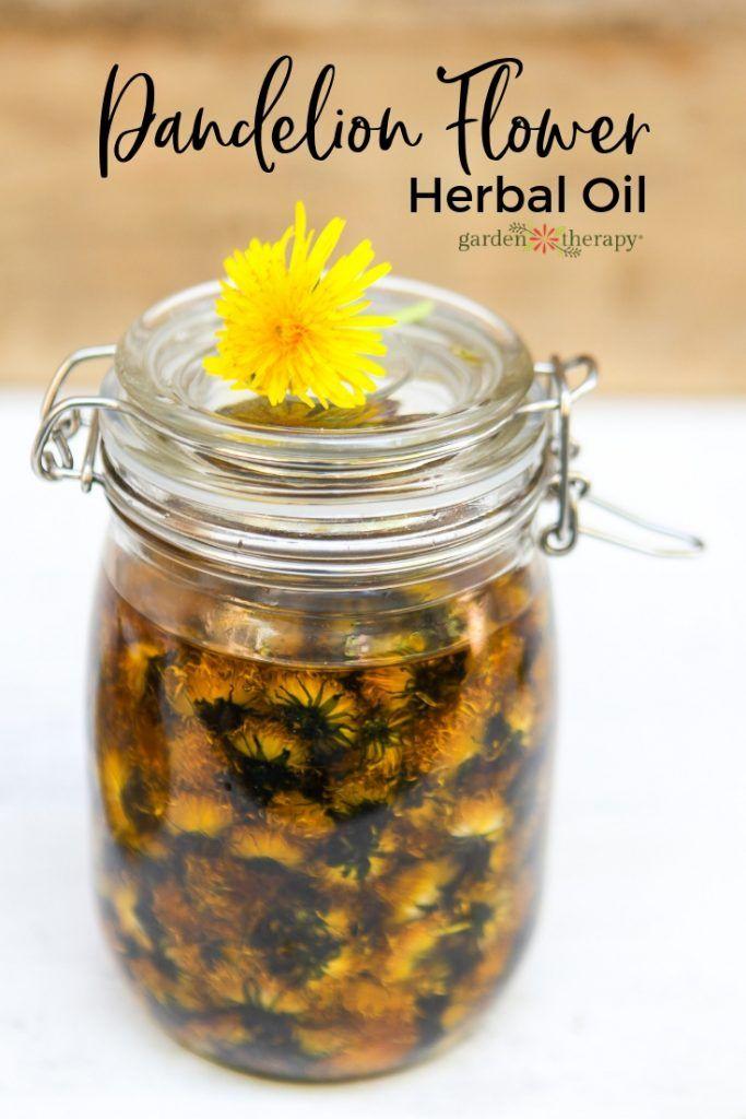 Dandelion Flower Herbal Oil Using The Cold Infusion Method With Images Herbalism Dandelion Flower Herbal Oil
