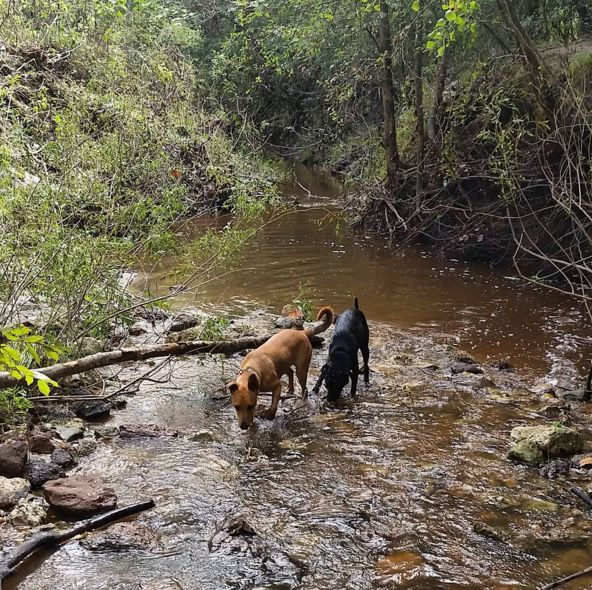 Dog Parks In Midland Texas