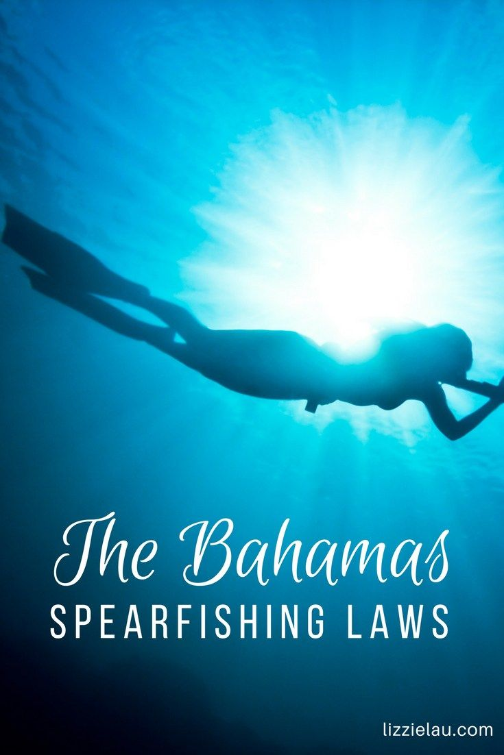 The Bahamas Spearfishing Laws #travel #watersports #freediving #thebahamas #bahamas
