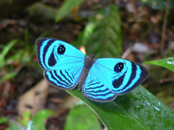 Gorgeous Butterfly! - mainly day-flying insect ~ Dreamy Nature