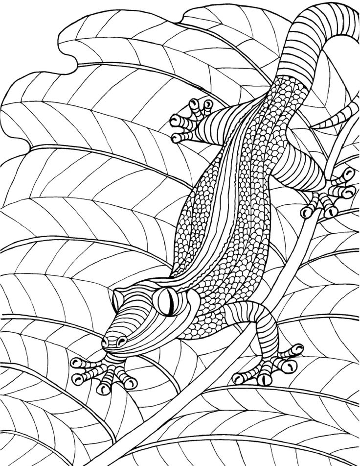 lizard adult colouring page colouring in sheets art craft art supplies i