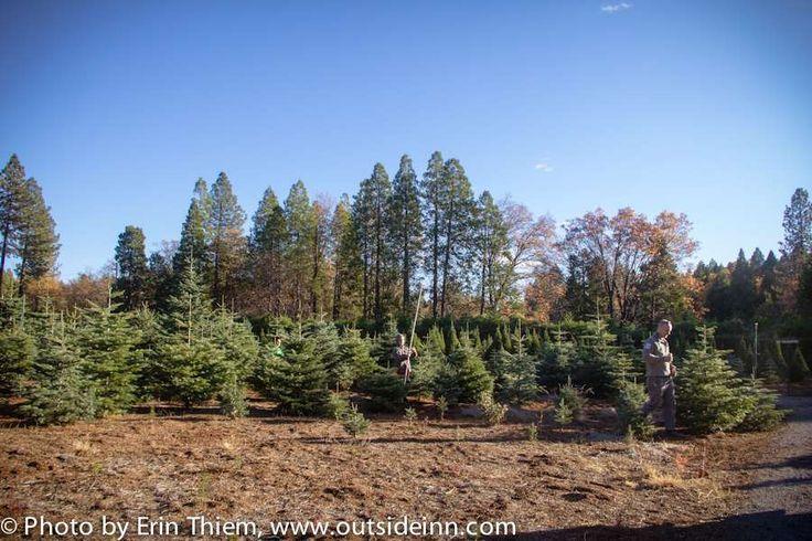 Mcburney Tree Farm Christmas Trees Tree Farms Nevada City Grass Valley