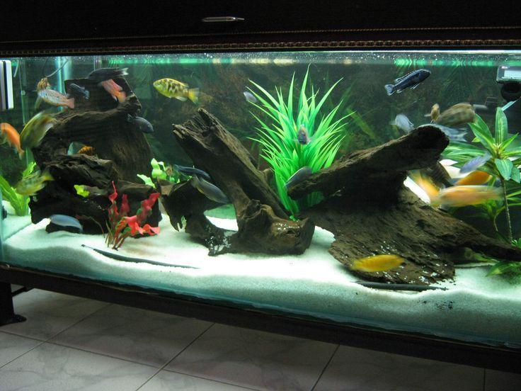 How To Set Up Aquarium