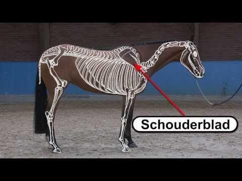 [RuitergevoelTip] Het skelet van een paard.