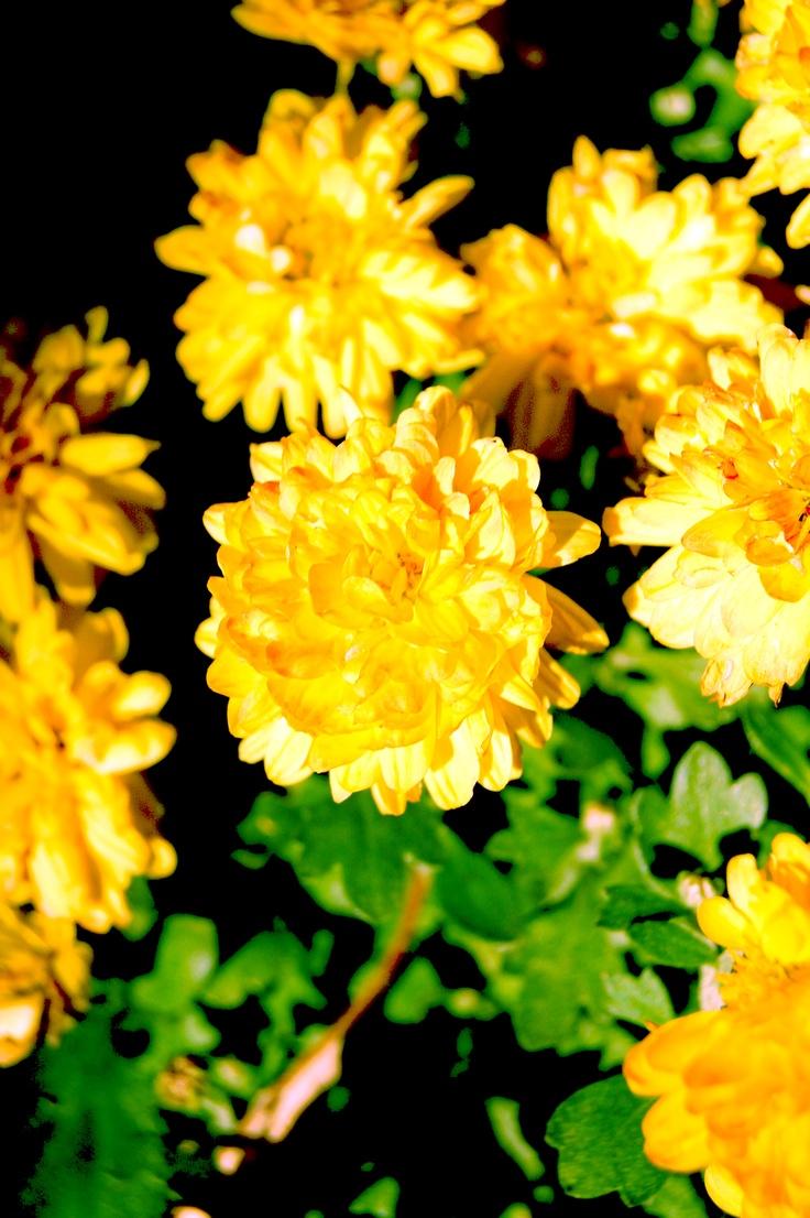 flowers sunrise
