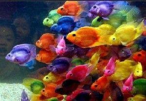 peixes-ornamentais-aquario-agua-doce