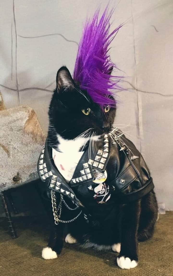 Pin By Onyx Kitten On Cute Pretty Animals Punk Cats Cat Cosplay Cute Animals