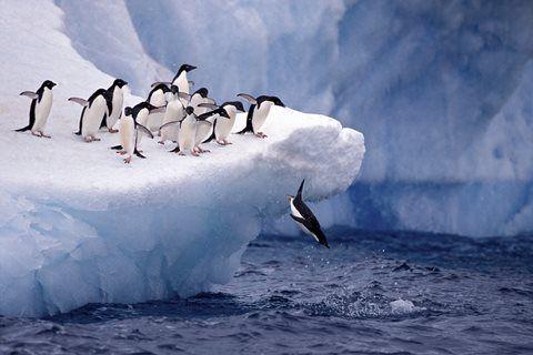 Antarctica Explorer - Sea Explorer