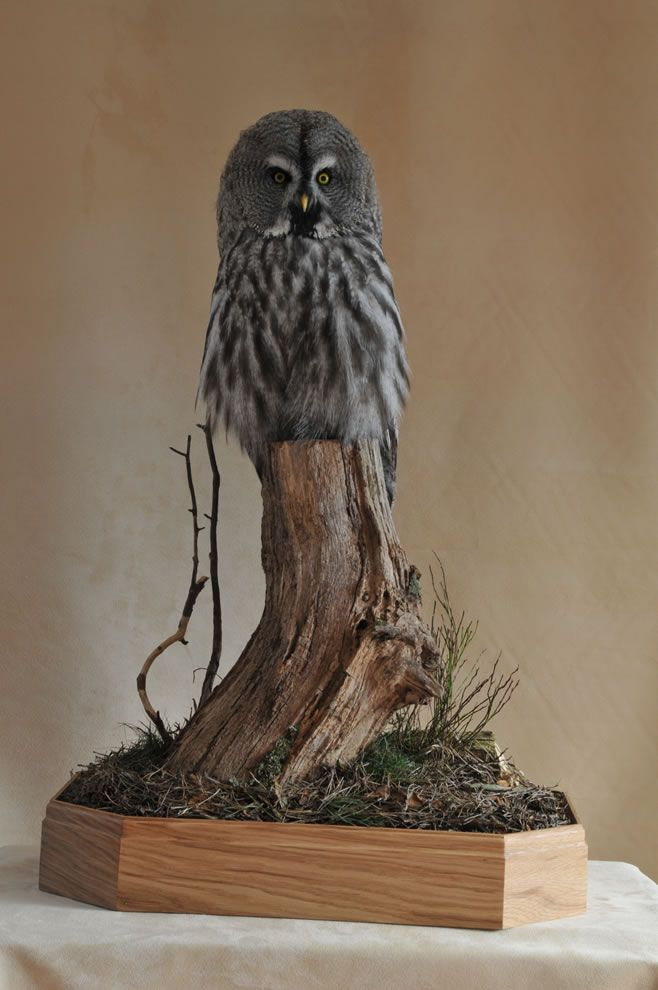 122 Best Images About Taxidermy On Pinterest Wall Mount