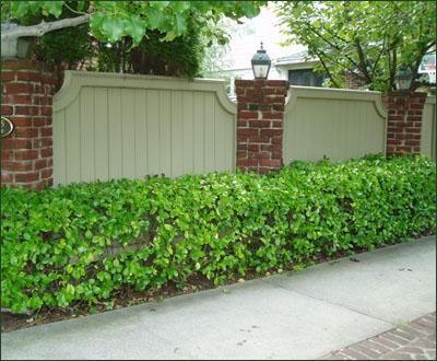 Image result for traditional brick fence with hedge