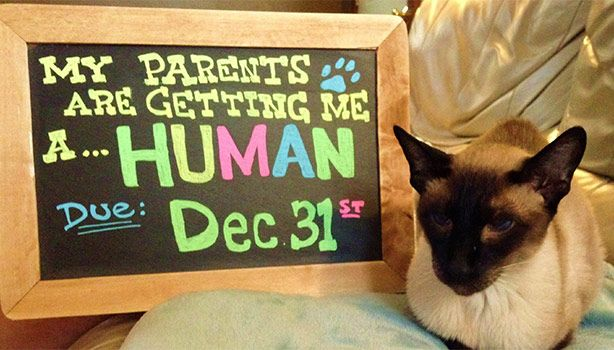 A pregnancy announcement involving your fur-baby? Definitely a must!