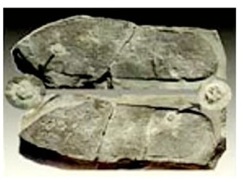 For those who believe in evolution, what do you think of the Out Of Place Artifacts? ?