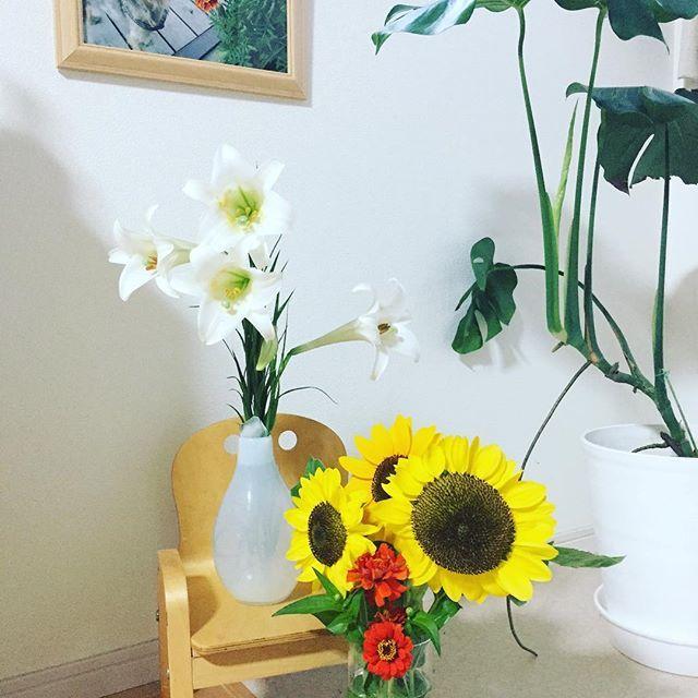 ひまわりたくさん咲いたから持ってってー!と お義母さん♪ ビタミンカラーはふーちゃんのテーマカラー❤️ お花をクンクンしていた姿が目に浮かびますU^ェ^U #風花 #愛犬 #ヨーキー #新盆 #ひまわり #sunflower #ユリ #lily #ひゃくにちそう #instadaily #instapic  #instaflower