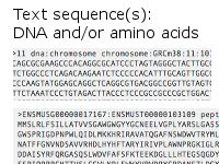 Ensembl genome browser 81: Bos taurus - Flanking sequence - rs109701491 (SNP)