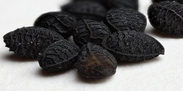Black cumin seed oil inhibits cancer cell activity and can even kill some types of cancer cells. Scientific research has shown that black seed oil (Nigella sativa) is an effective treatment for cancer in animal studies, and can be as effective as anti-cancer drugs for some types of cancer. Black cumin seed oil and its …