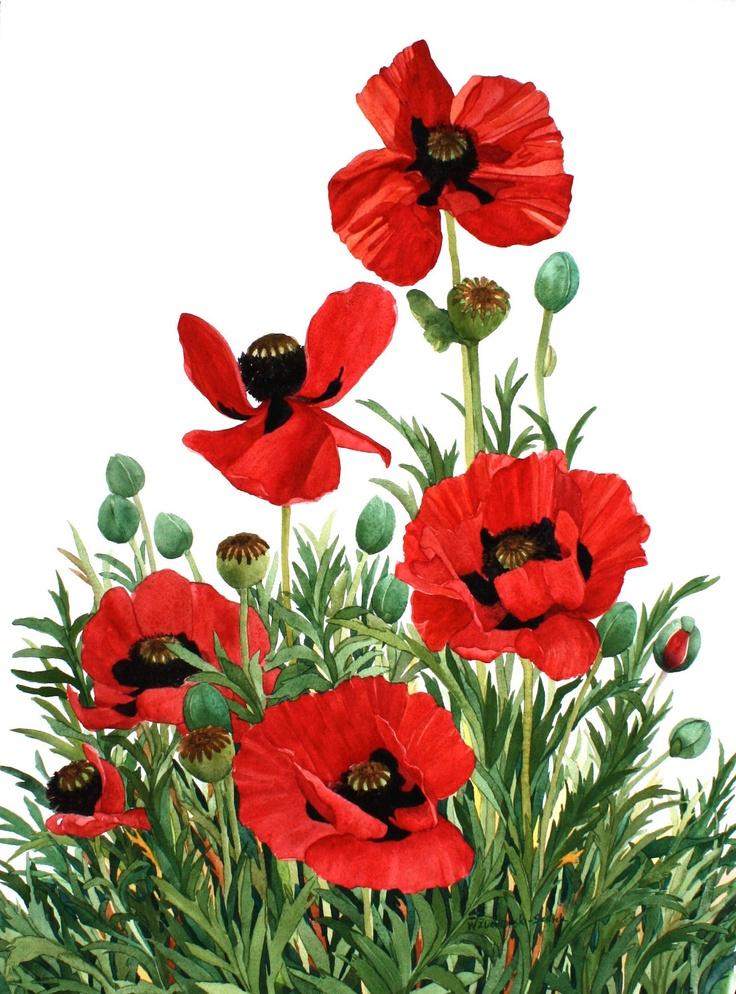 Red Poppies from My Garden Original by wandazuchowskischick