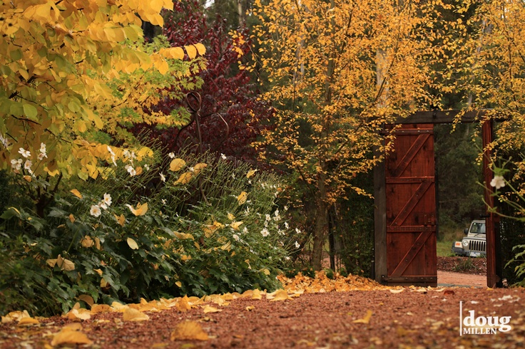 Entry path like no other - especially in Autumn.