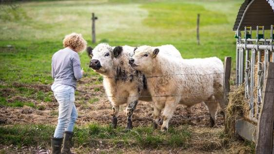 How do you get an animal science degree?  #education