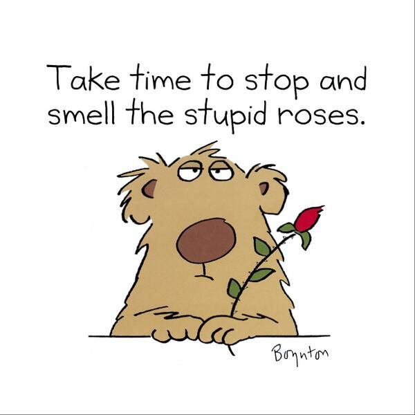 Take Time To Smell The Roses Quote: 19 Best Sandra Boynton Images On Pinterest