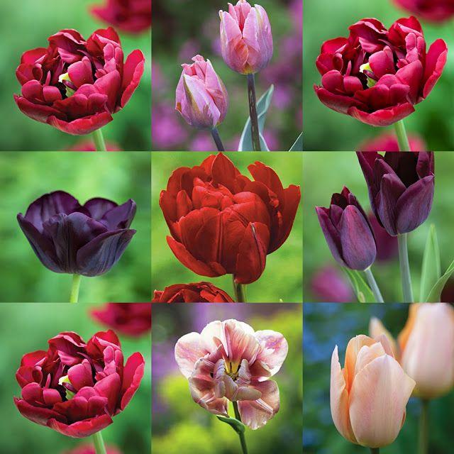 Https//mariekenolsen.blogspot.com Sarah Raven foto: Jonathan Buckley