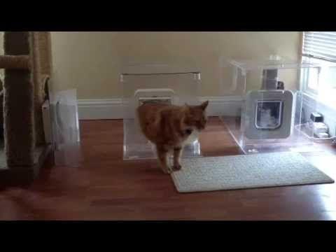 18 Best Sureflap Microchip Pet Door Products Images On Pinterest