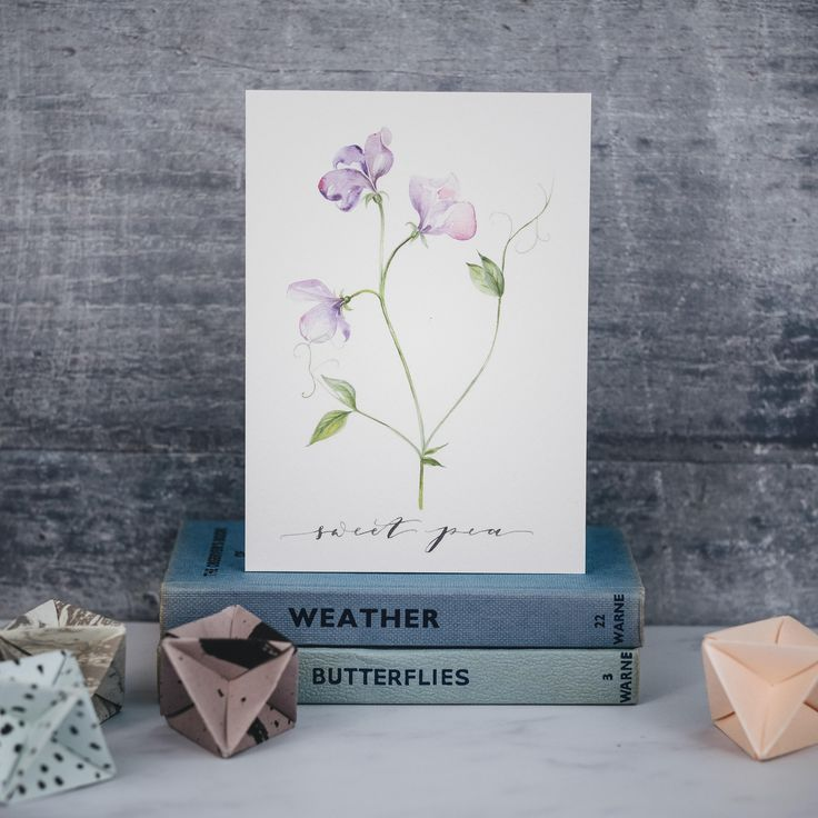 hand painted sweet pea. Botanical Illustrations in Watercolour. Please get in touch with your bespoke commission.