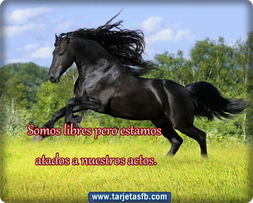 Imagenes de caballos con.frases - Imagui