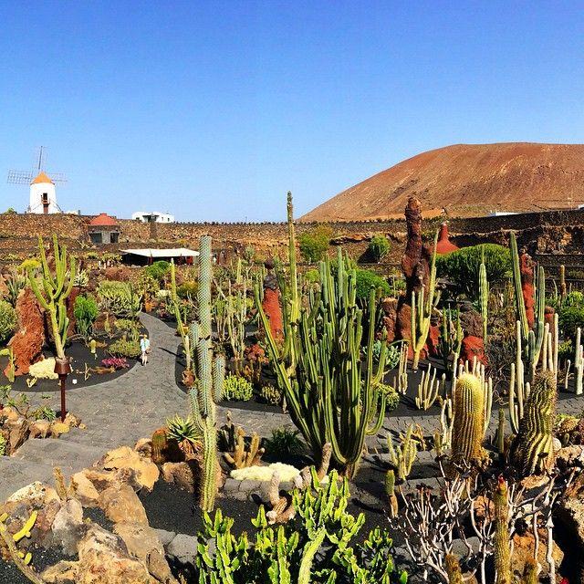 I Jardín de Cactus findes flere tusinde forskellige kaktusser fra alle verdenshjørne. Læs mere her: www.apollorejser.dk/rejser/europa/spanien/de-kanariske-oer/lanzarote