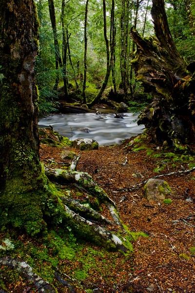 Hugel River, Cradle Mt. - Lake St Clair National Park, Tasmania