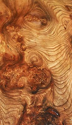 Awesome grain!!  (English Wych Elm wood)