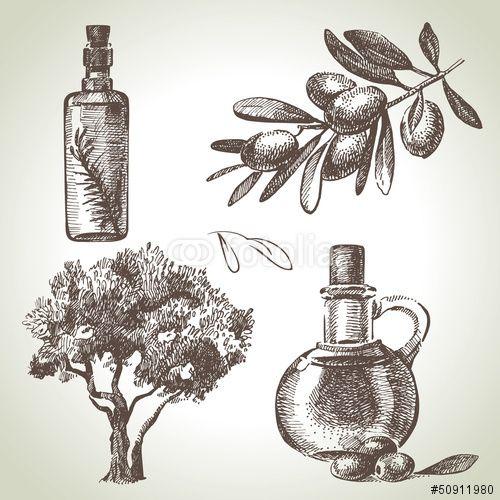 Вектор: Hand drawn olive set