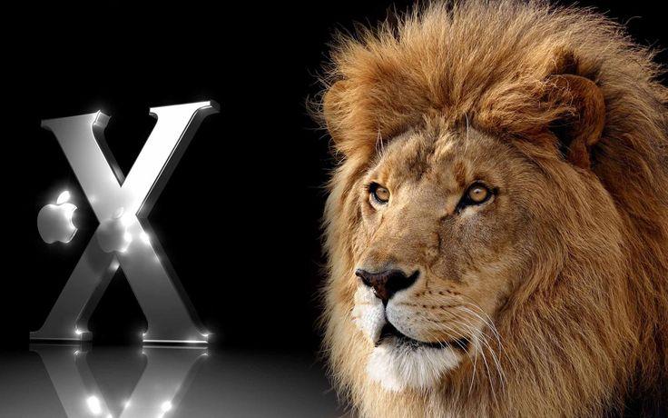 Best 25 Lion Hd Wallpaper Ideas On Pinterest: 25+ Best Ideas About Lion Wallpaper On Pinterest