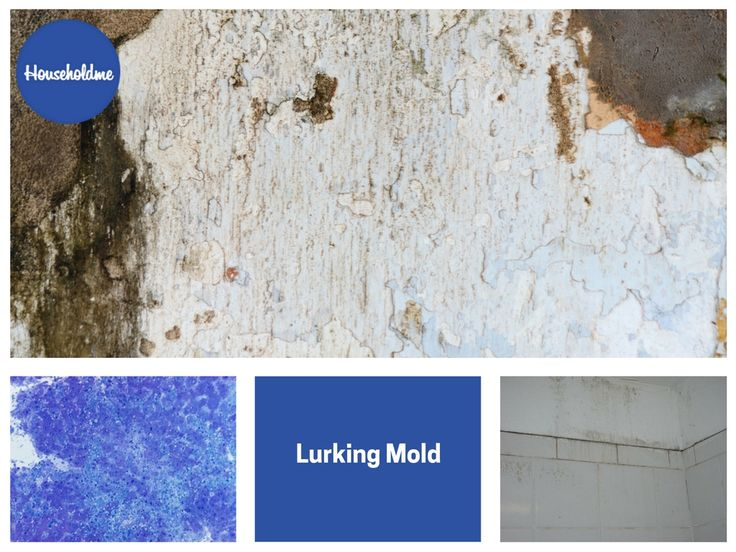 Lurking Mold  #mold #cleaning #clean #molding