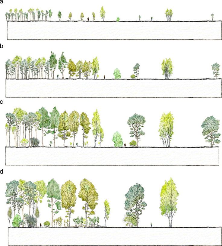 Anders busse urban forestry urban greening some visual for Garden design visualiser