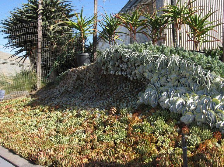 Garden Arrangements 127 best low water garden design images on pinterest | landscaping