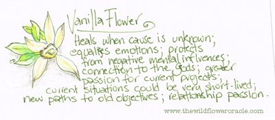 Vanilla Flower  Wildflower Oracle Messages