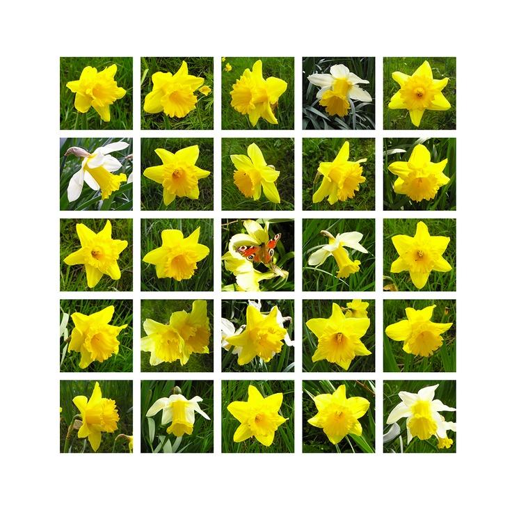 Reading Contemporary Art Fair 2103-Lin Osborn-Daffodil