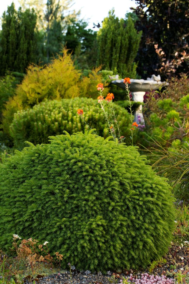 271 best winter garden u0026 shrubs images on pinterest winter