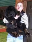 Tibetin Mastiff Puppy. LOVE IT!