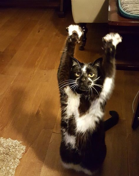So, this adorable cat keeps putting its arms in the air and no one knows why but…