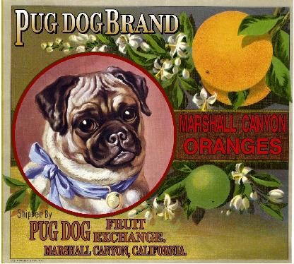 Marshall Canyon Pug Dog Orange Citrus Crate Label Art Print
