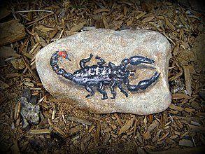 Dekorácie - škorpión - 1470936